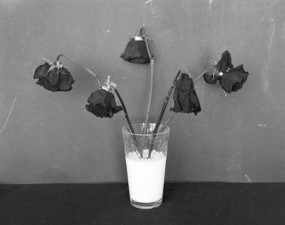 black-and-white-dead-flowers-dead-roses-milk-photography-Favim_com-199550